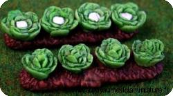 JARDINAGE - Culture de CHOUX-FLEURS miniatures