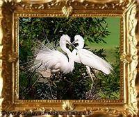 TABLEAU miniature, OISEAUX blancs - Série LES OISEAUX INSEPARABLES